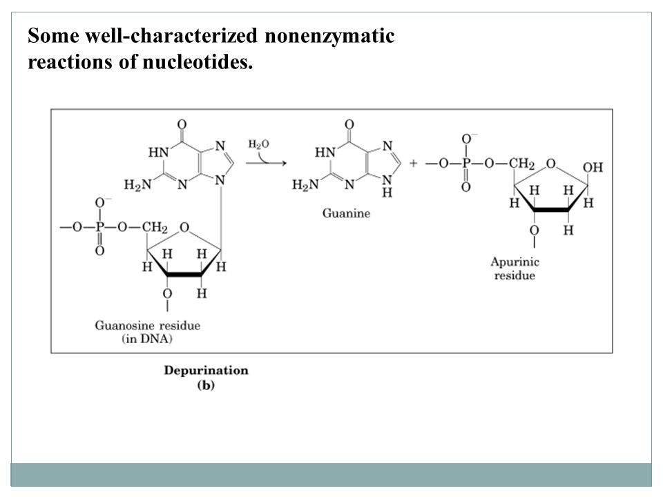 Some well-characterized nonenzymatic reactions of nucleotides.