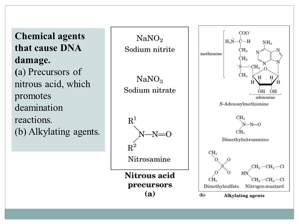 Chemical agents that cause DNA damage.