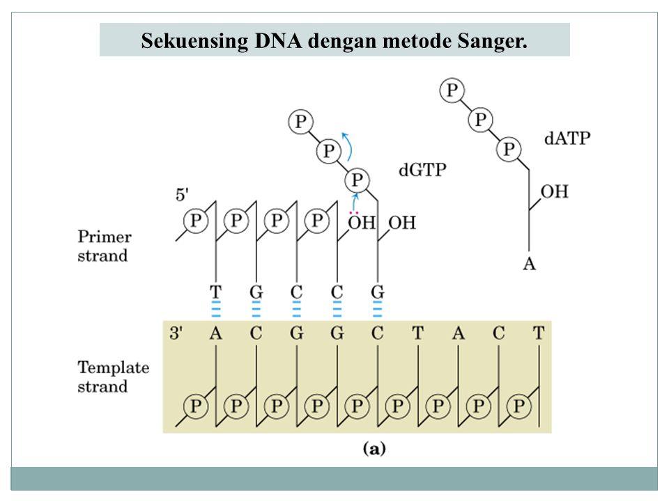 Sekuensing DNA dengan metode Sanger.