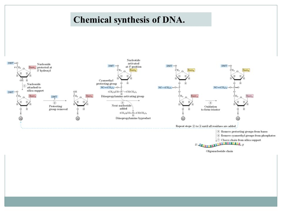 The Chemical Synthesis of DNA/RNA: Our Gift to Science