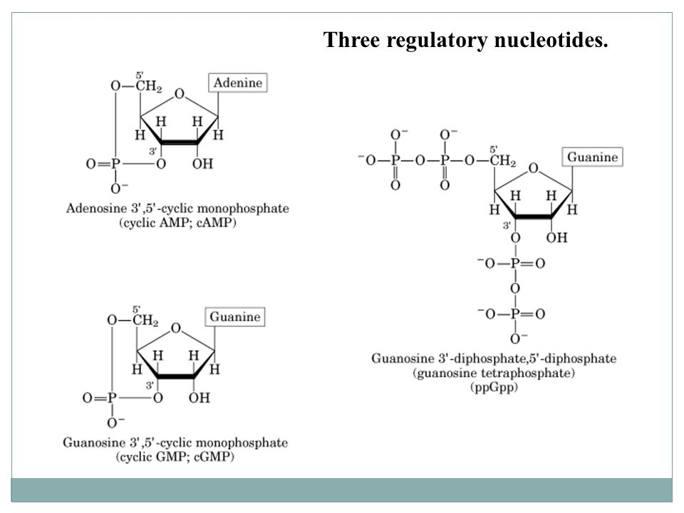 Three regulatory nucleotides.