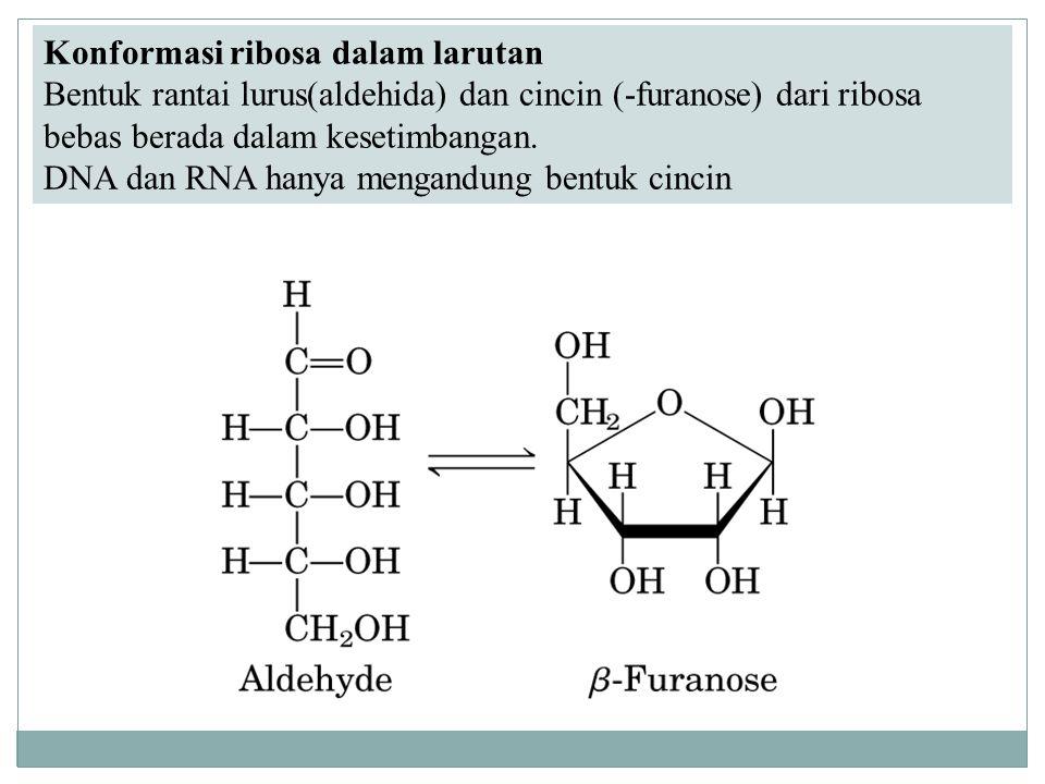 Konformasi ribosa dalam larutan