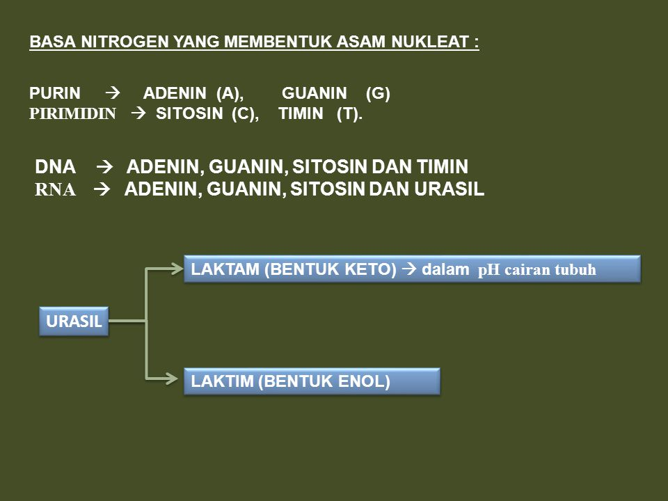 DNA  ADENIN, GUANIN, SITOSIN DAN TIMIN