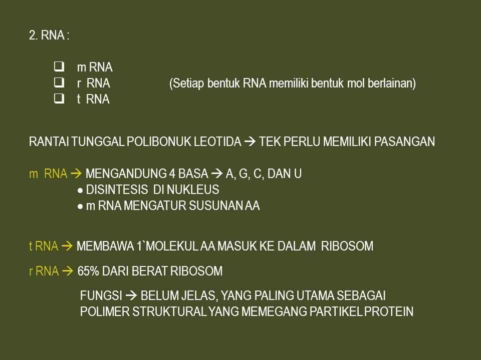 RNA : m RNA. r RNA (Setiap bentuk RNA memiliki bentuk mol berlainan) t RNA.