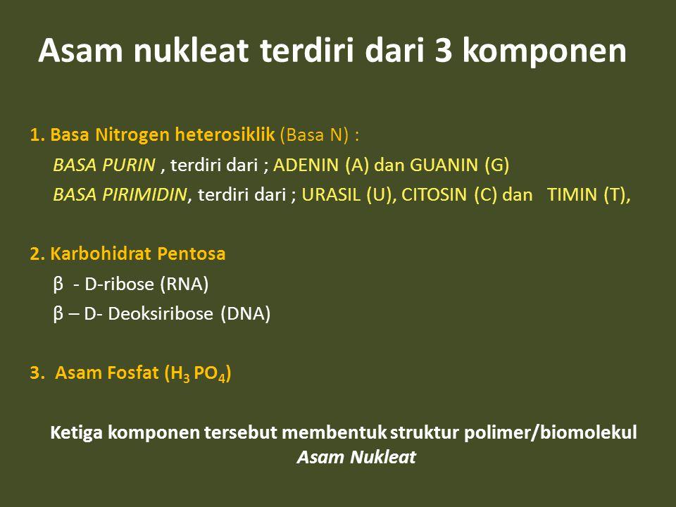 Asam nukleat terdiri dari 3 komponen