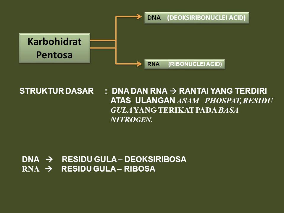 Karbohidrat Pentosa STRUKTUR DASAR : DNA DAN RNA  RANTAI YANG TERDIRI