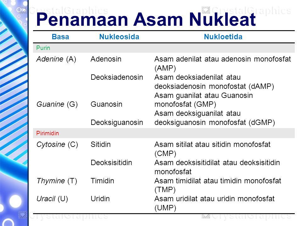Penamaan Asam Nukleat Basa Nukleosida Nukloetida Adenine (A)