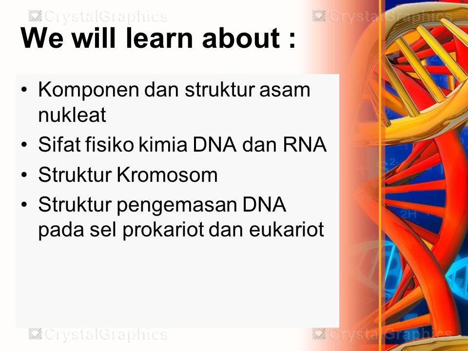 We will learn about : Komponen dan struktur asam nukleat