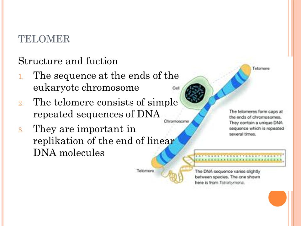 telomer Structure and fuction