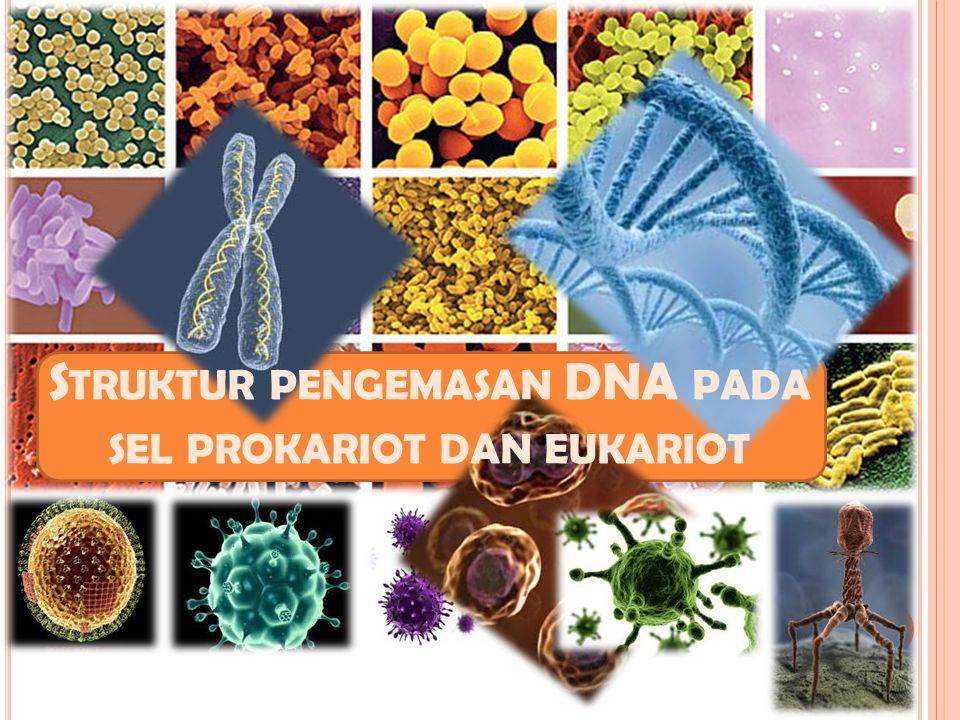 Struktur pengemasan DNA pada sel prokariot dan eukariot