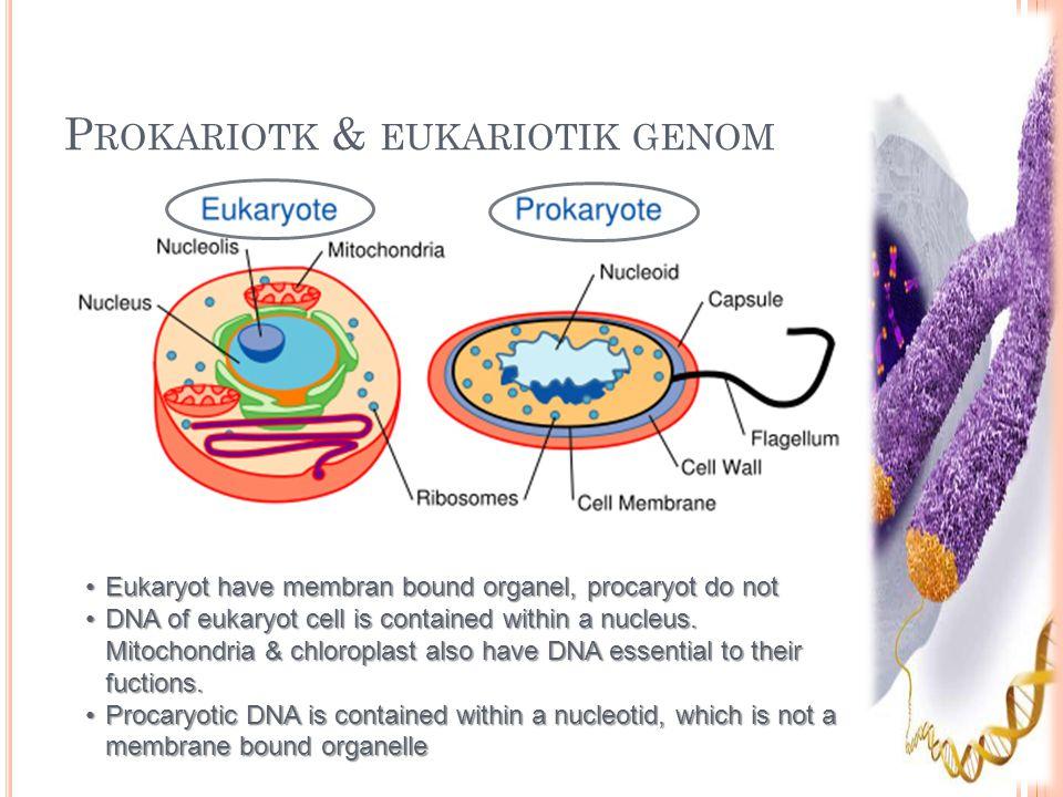 Prokariotk & eukariotik genom