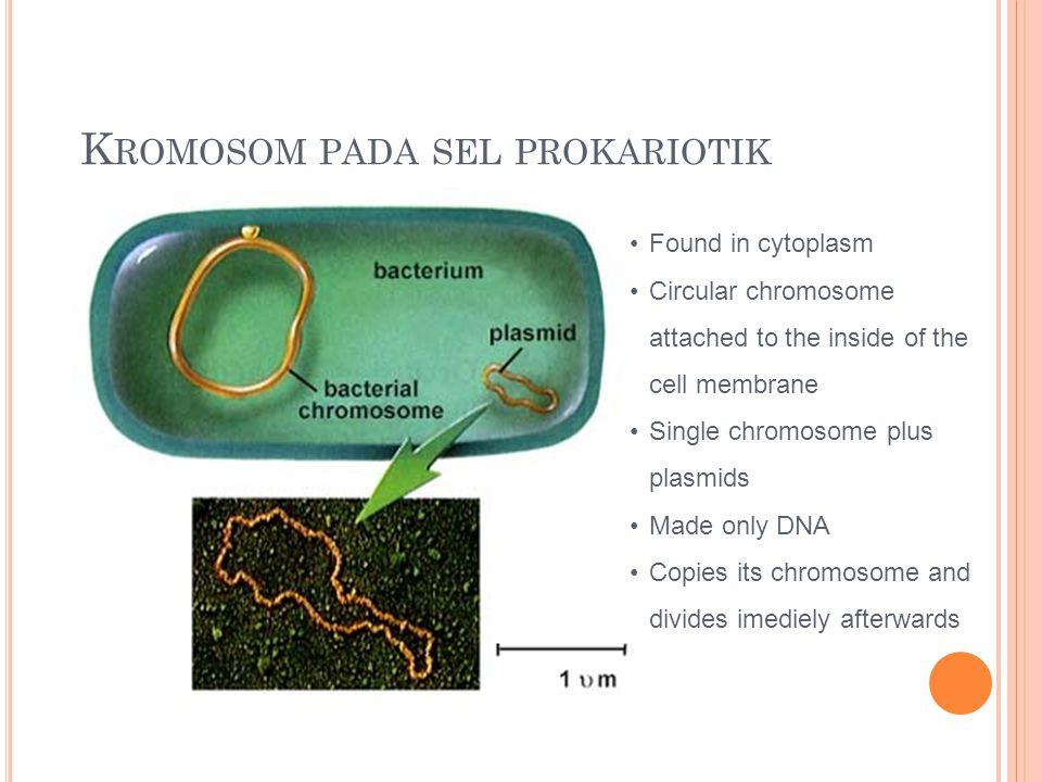 Kromosom pada sel prokariotik