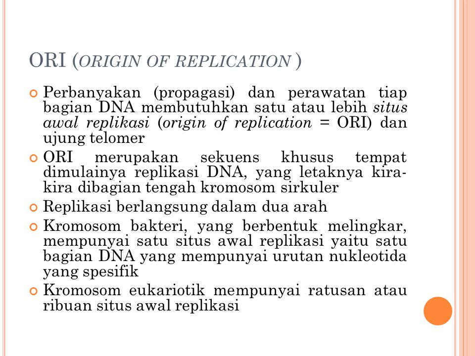 ORI (origin of replication )