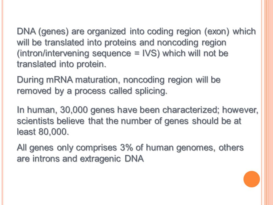 DNA (genes) are organized into coding region (exon) which will be translated into proteins and noncoding region (intron/intervening sequence = IVS) which will not be translated into protein.