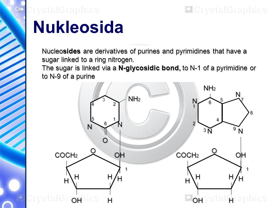 Nukleosida Nucleosides are derivatives of purines and pyrimidines that have a sugar linked to a ring nitrogen.