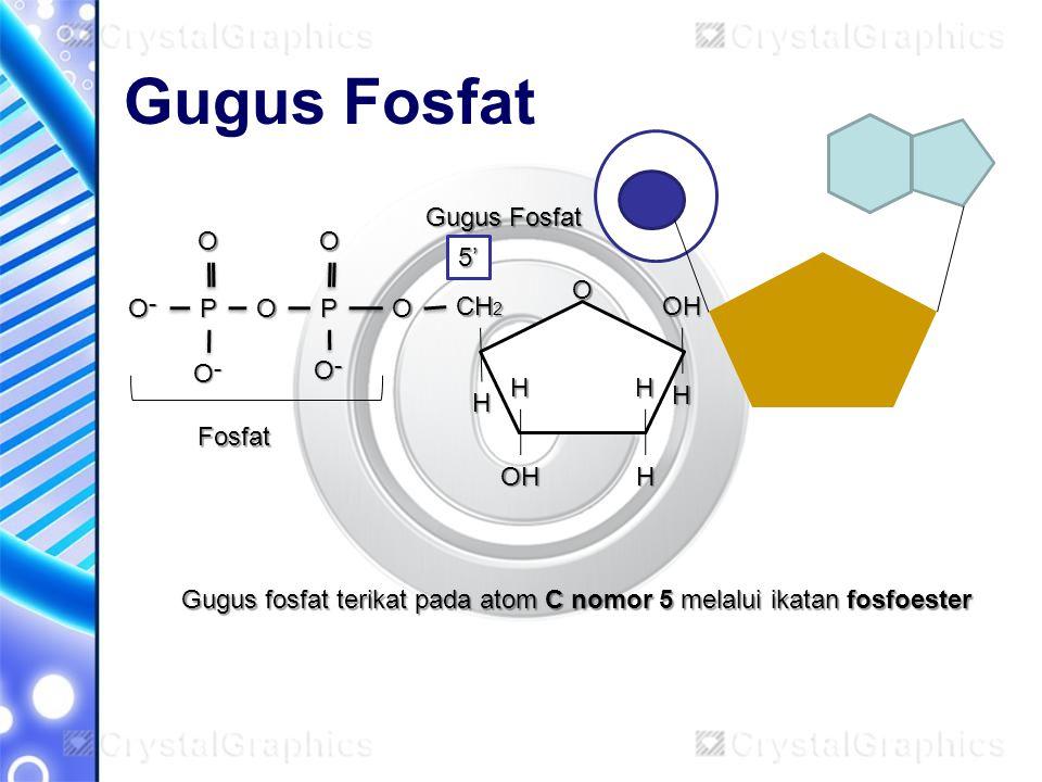 Gugus Fosfat Gugus Fosfat O O 5' O O־ P O P O CH2 OH O־ O־ H H H H
