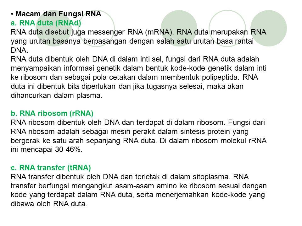 Macam dan Fungsi RNA a. RNA duta (RNAd) RNA duta disebut juga messenger RNA (mRNA). RNA duta merupakan RNA yang urutan basanya berpasangan dengan salah satu urutan basa rantai DNA. RNA duta dibentuk oleh DNA di dalam inti sel, fungsi dari RNA duta adalah menyampaikan informasi genetik dalam bentuk kode-kode genetik dalam inti ke ribosom dan sebagai pola cetakan dalam membentuk polipeptida. RNA duta ini dibentuk bila diperlukan dan jika tugasnya selesai, maka akan dihancurkan dalam plasma.