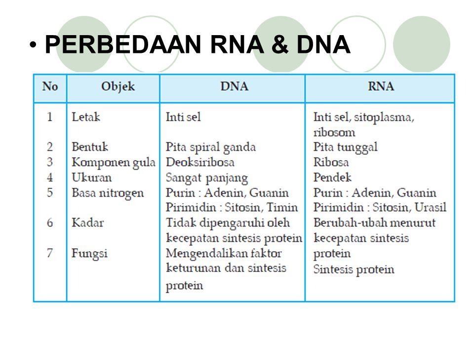 PERBEDAAN RNA & DNA
