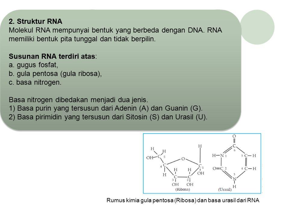 Susunan RNA terdiri atas: