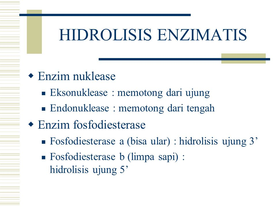HIDROLISIS ENZIMATIS Enzim nuklease Enzim fosfodiesterase