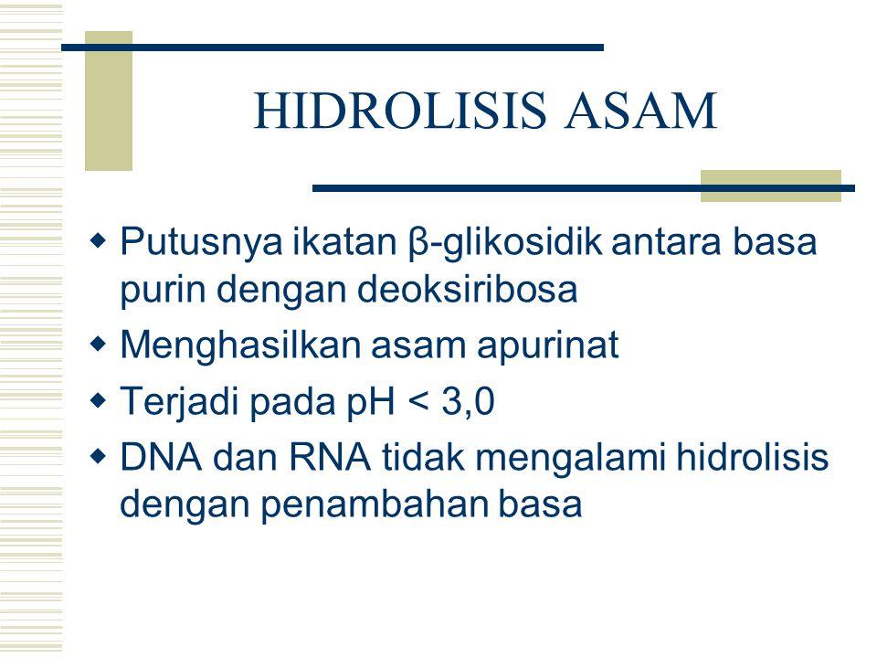 HIDROLISIS ASAM Putusnya ikatan β-glikosidik antara basa purin dengan deoksiribosa. Menghasilkan asam apurinat.
