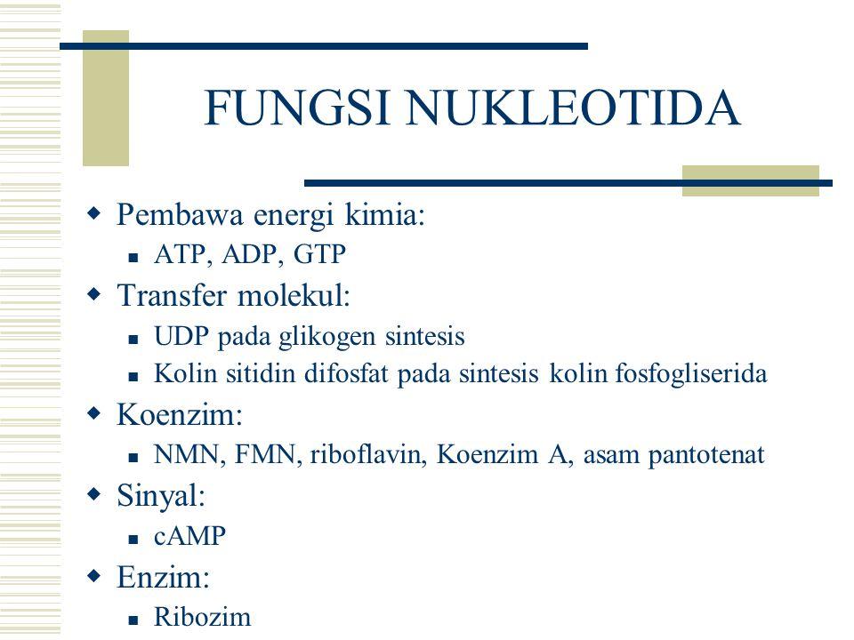 FUNGSI NUKLEOTIDA Pembawa energi kimia: Transfer molekul: Koenzim:
