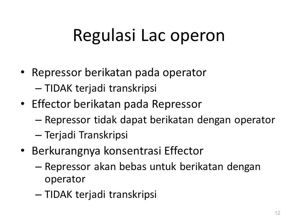 Regulasi Lac operon Repressor berikatan pada operator