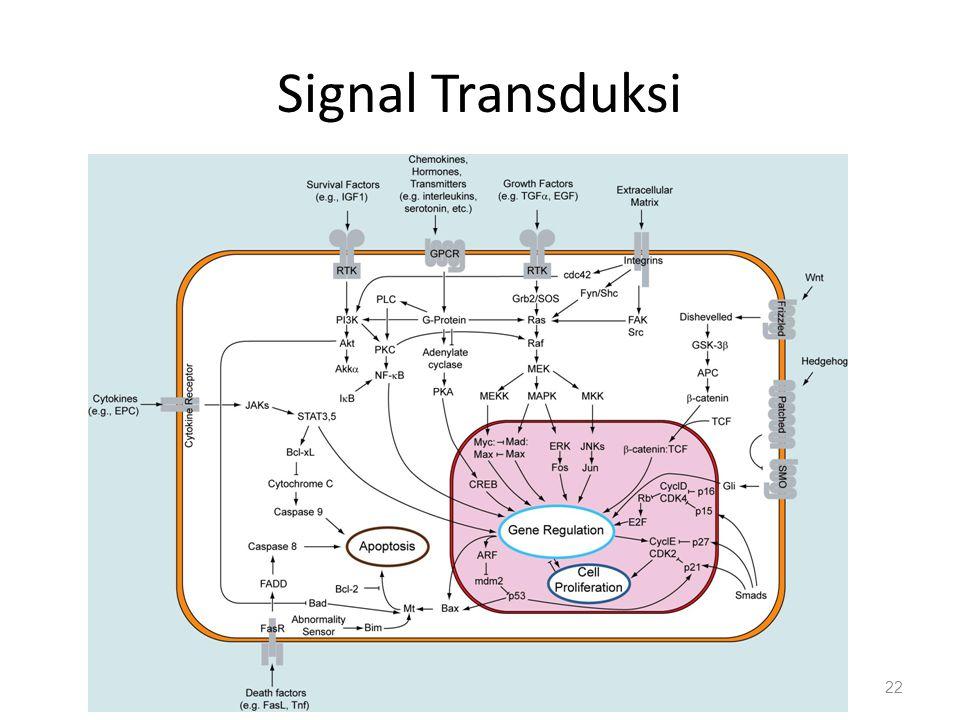 Signal Transduksi