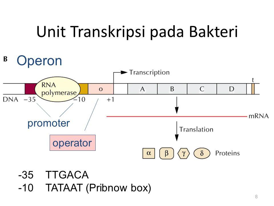 Unit Transkripsi pada Bakteri