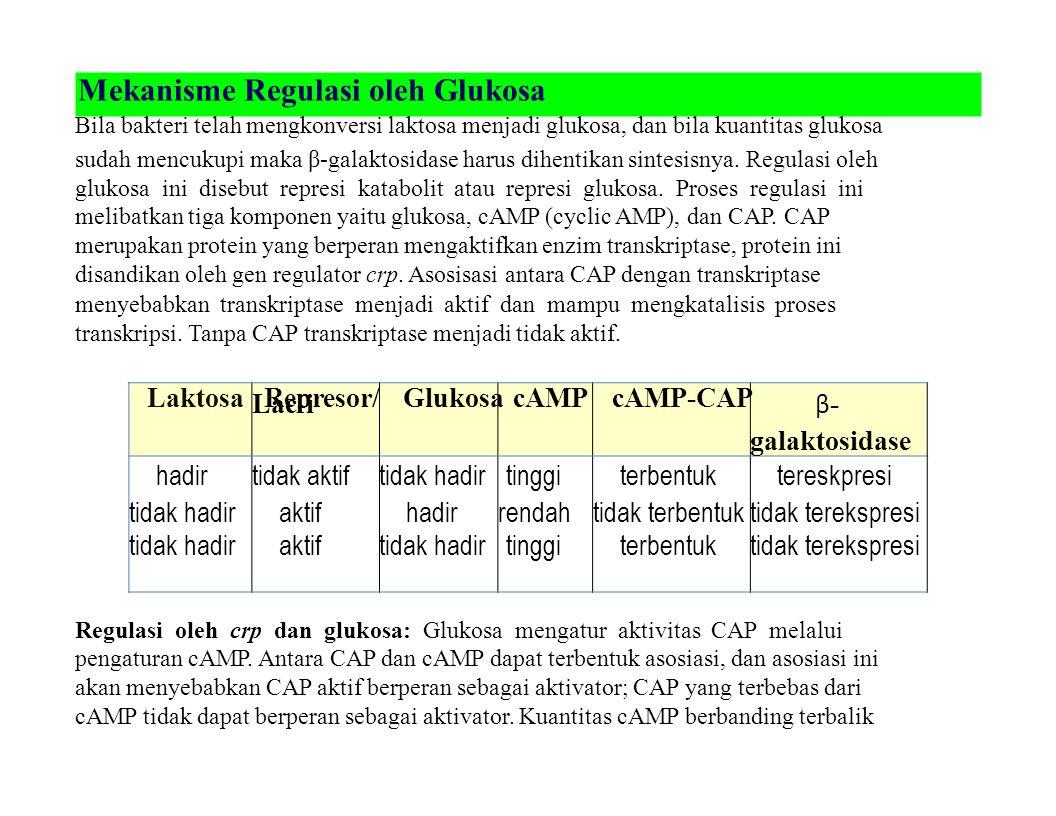 Laktosa Represor/ Glukosa cAMP cAMP-CAP