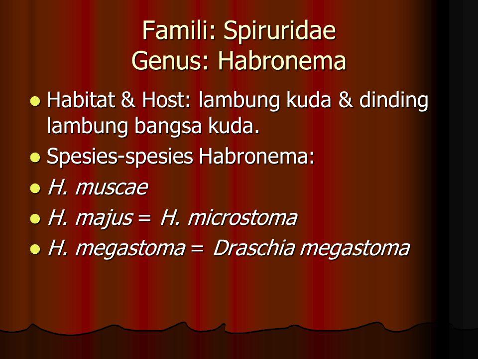 Famili: Spiruridae Genus: Habronema