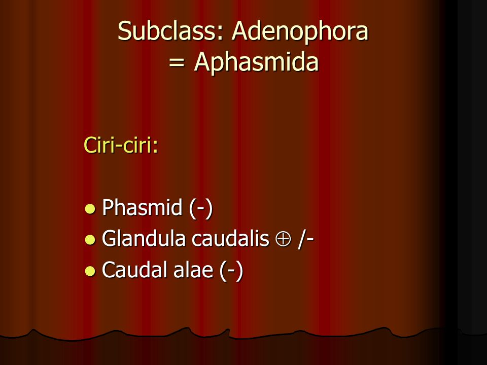 Subclass: Adenophora = Aphasmida