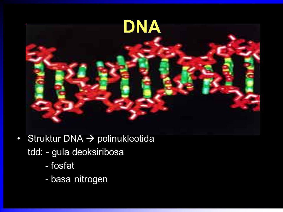 DNA Struktur DNA  polinukleotida tdd: - gula deoksiribosa - fosfat