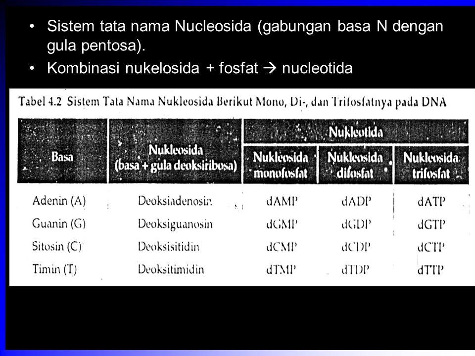 Sistem tata nama Nucleosida (gabungan basa N dengan gula pentosa).