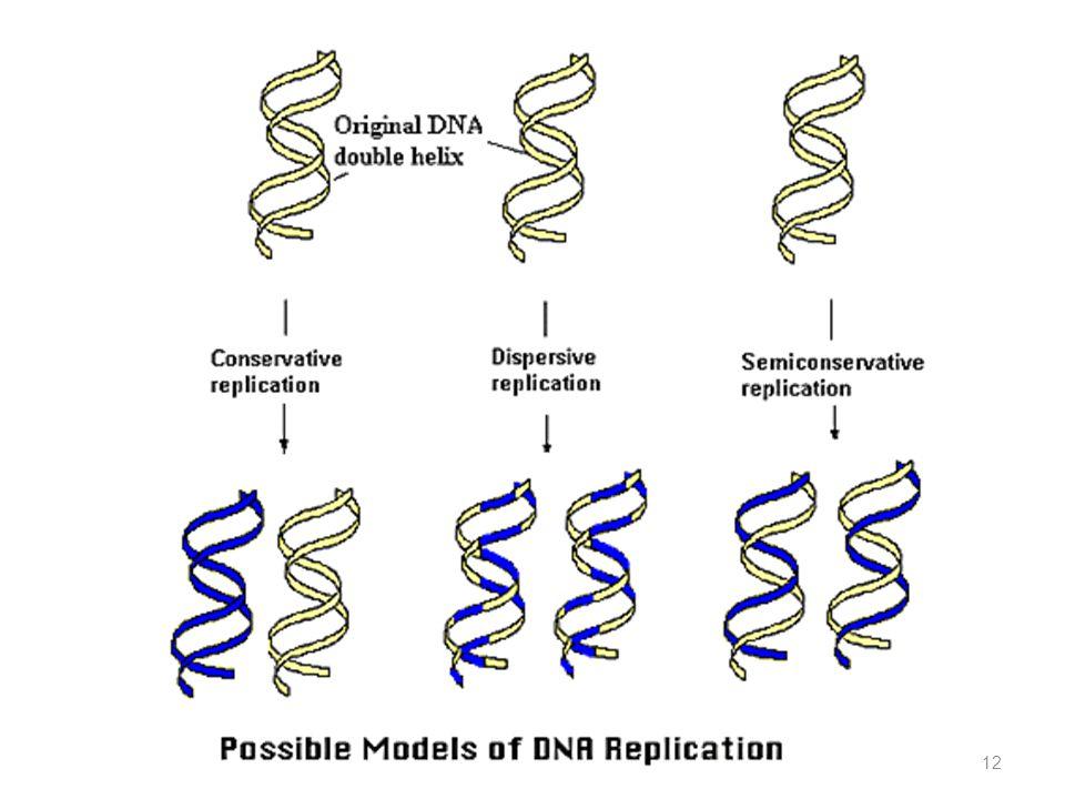 Kemungkinan Replikasi DNA