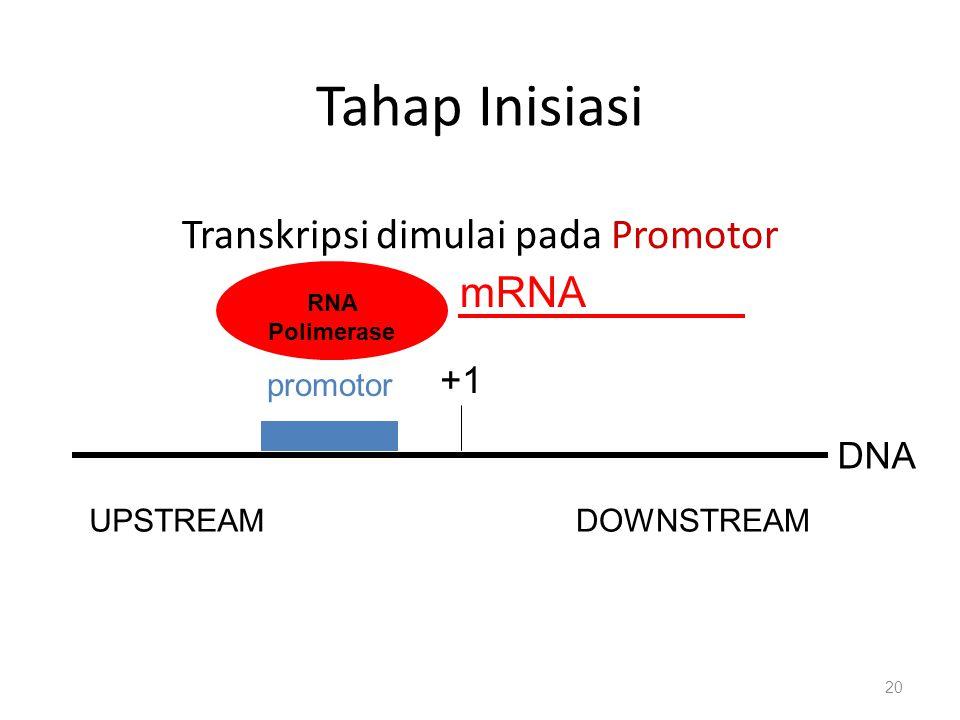 Transkripsi dimulai pada Promotor