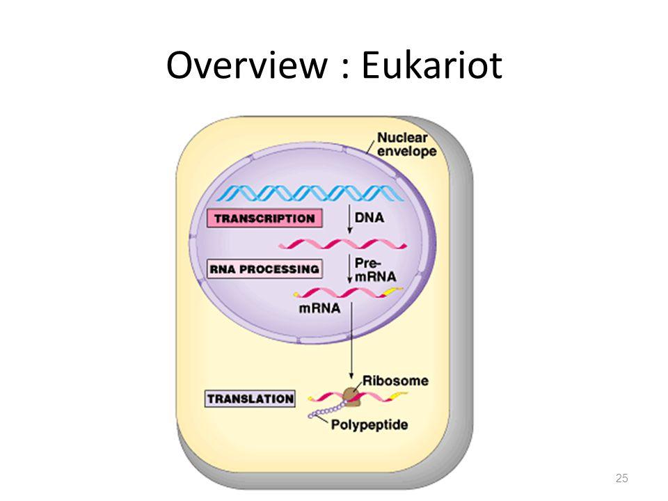 Overview : Eukariot