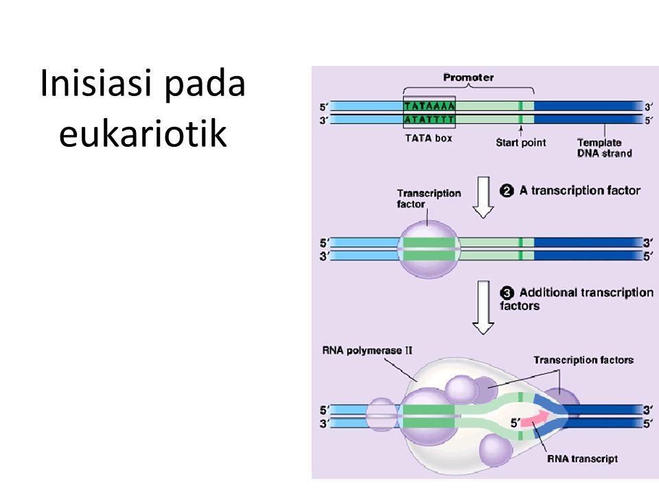 Inisiasi pada eukariotik