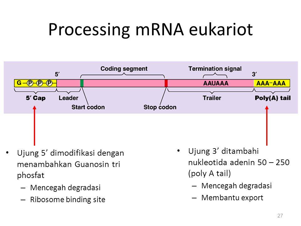 Processing mRNA eukariot
