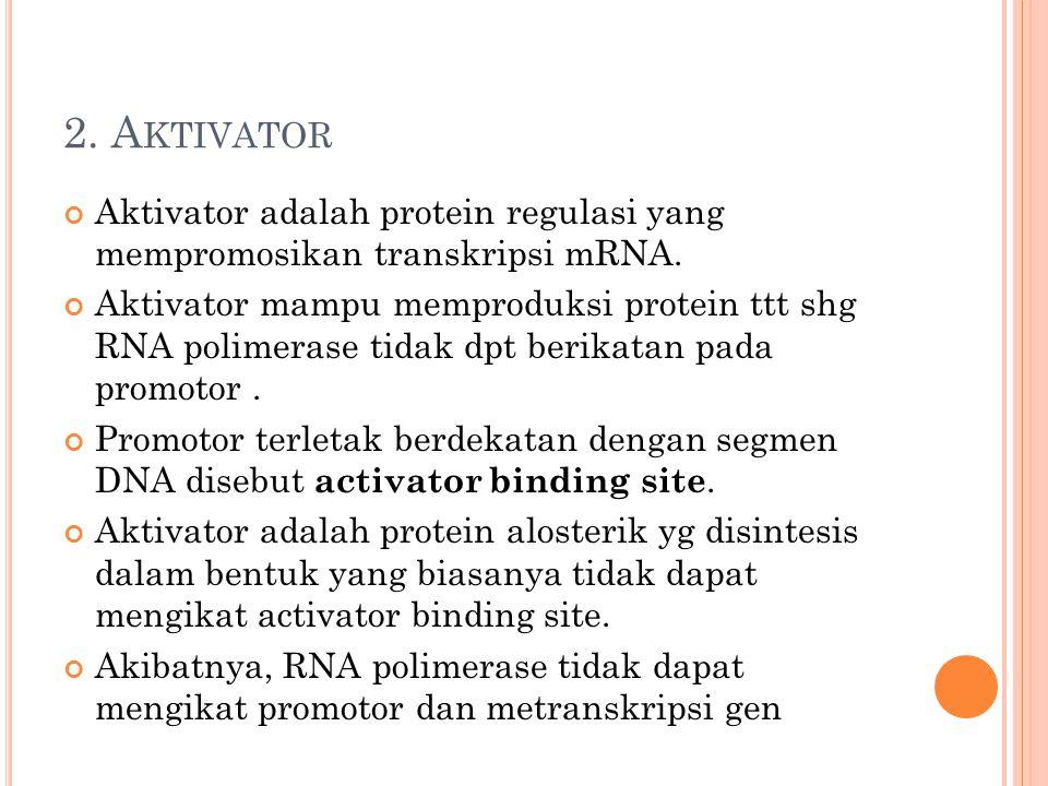 2. Aktivator Aktivator adalah protein regulasi yang mempromosikan transkripsi mRNA.