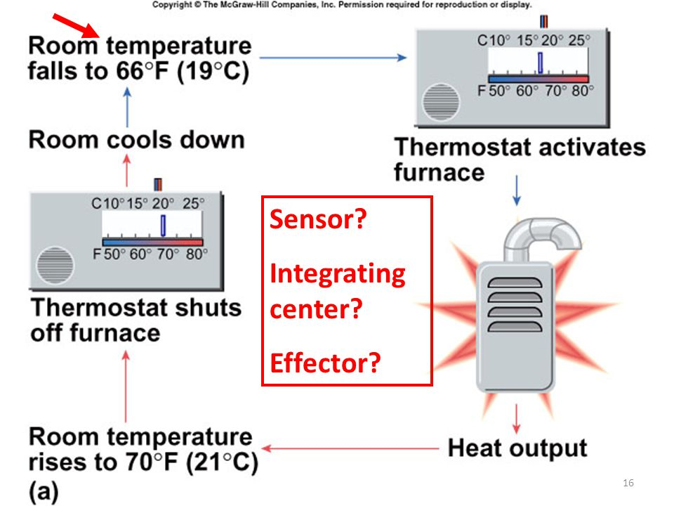 Sensor Integrating center Effector