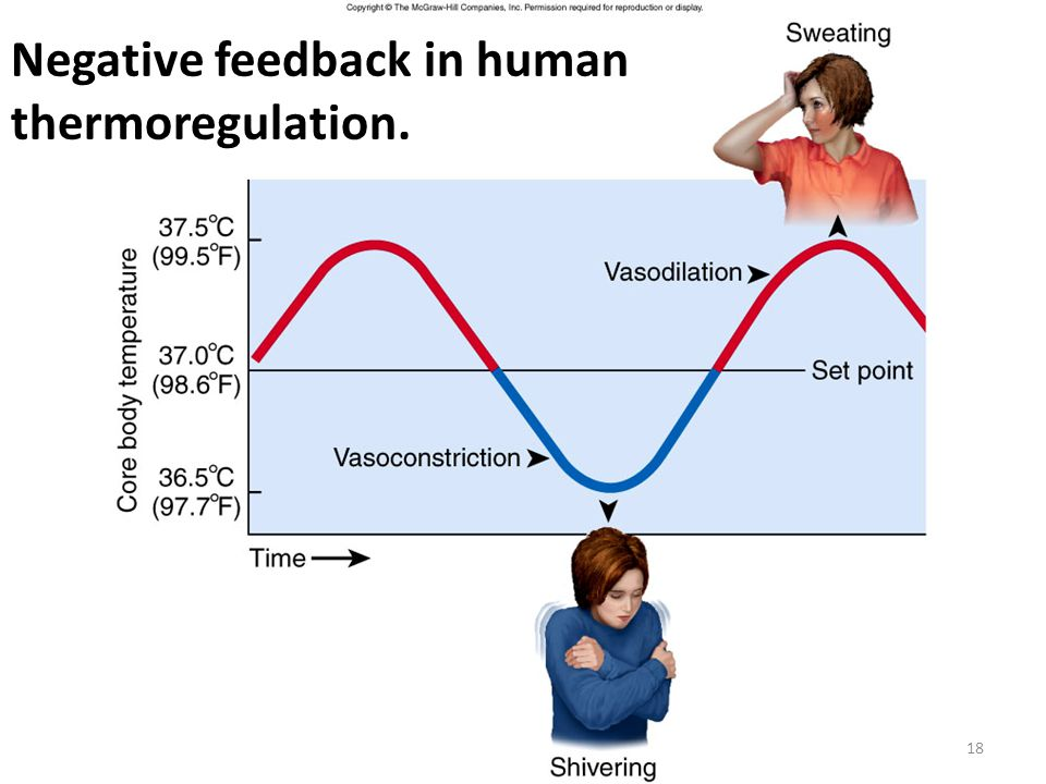 Negative feedback in human thermoregulation.