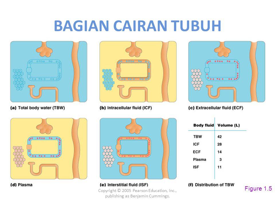BAGIAN CAIRAN TUBUH Figure 1.5