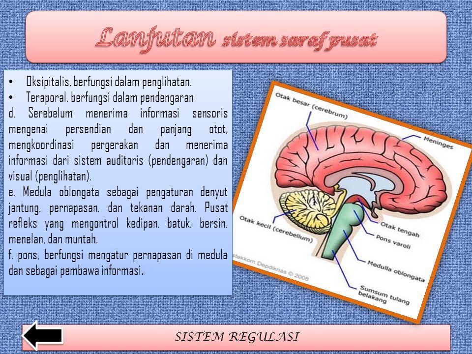 Lanjutan sistem saraf pusat