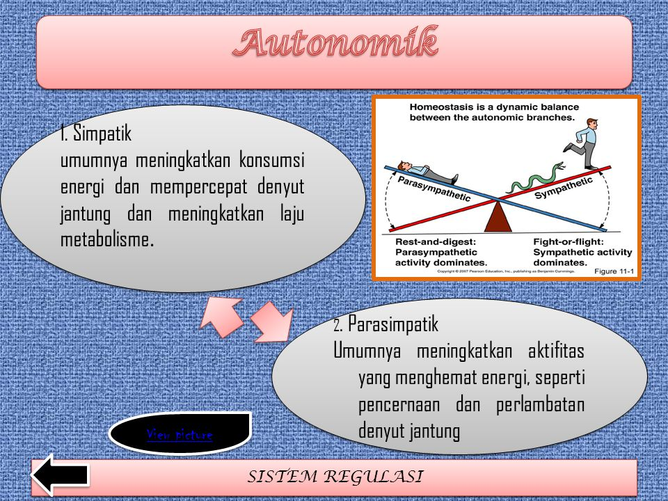 Autonomik 1. Simpatik. umumnya meningkatkan konsumsi energi dan mempercepat denyut jantung dan meningkatkan laju metabolisme.