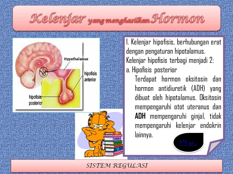 Kelenjar yang menghasilkan Hormon