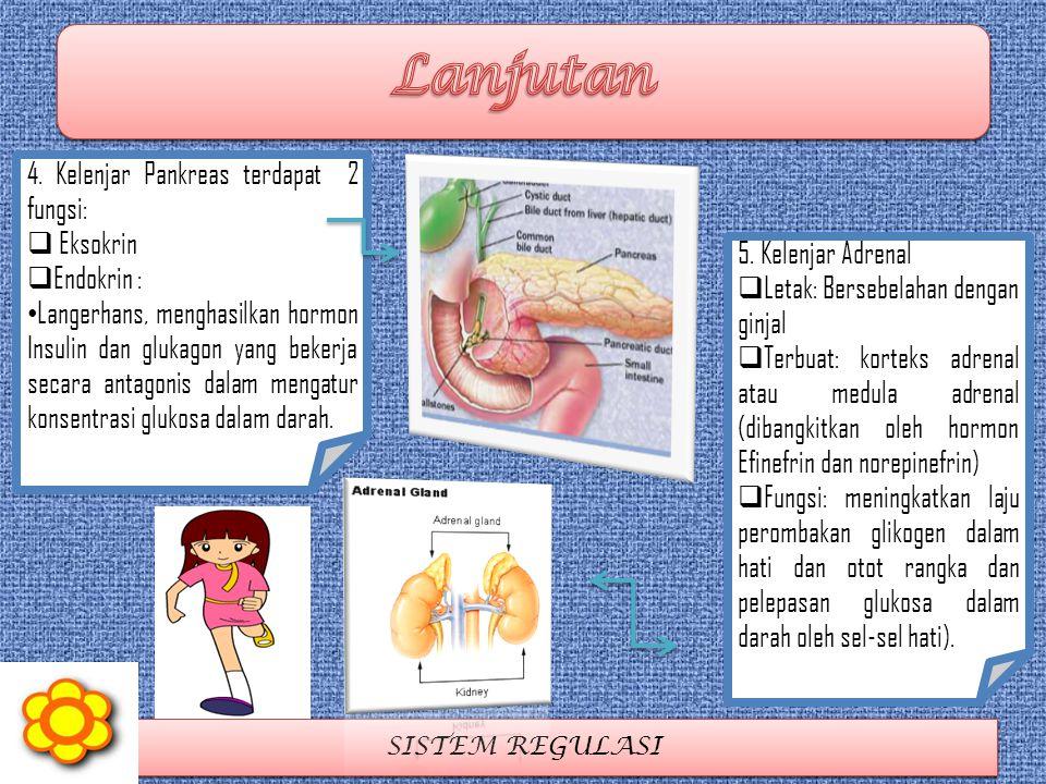 Lanjutan 4. Kelenjar Pankreas terdapat 2 fungsi: Eksokrin Endokrin :