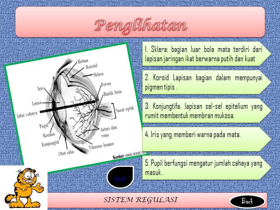 Penglihatan 1. Sklera: bagian luar bola mata terdiri dari lapisan jaringan ikat berwarna putih dan kuat.