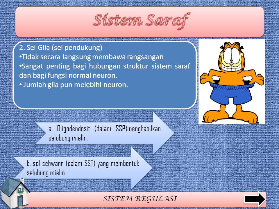 Sistem Saraf 2. Sel Glia (sel pendukung)