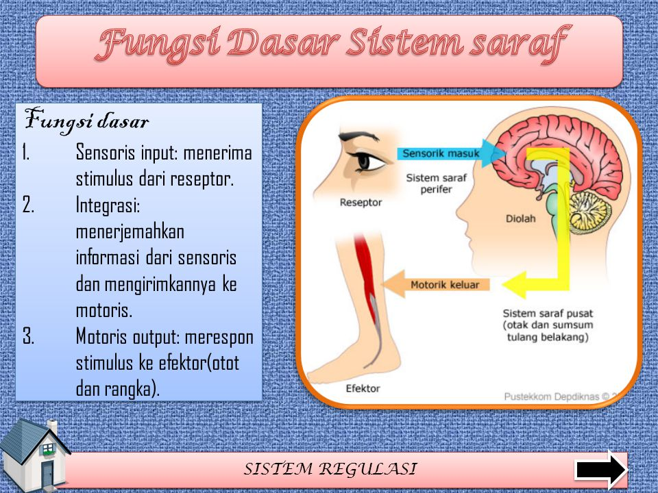 Fungsi Dasar Sistem saraf